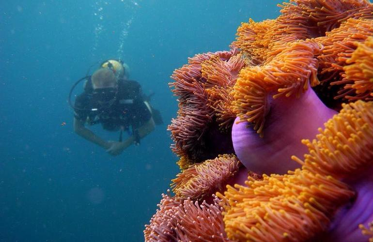 Tailand/Diving/3.jpeg